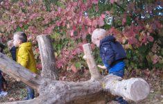 'Struinend' de herfst ontdekken in de peutergroep